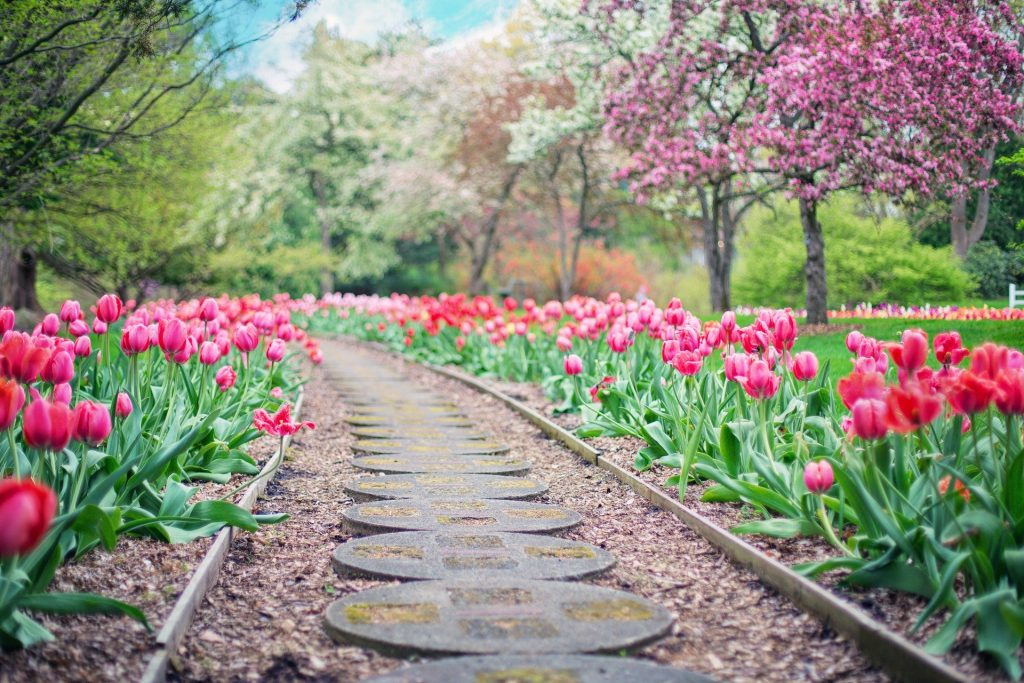 garden path with flowers